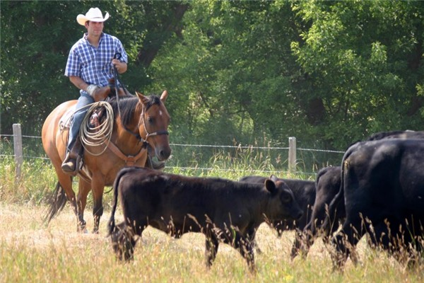 Cattle Drive 101 - get along little doggies at Historic Reesor Ranch!