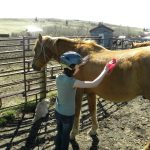 Young guest enjoying brushing her new friend at Historic Reesor Ranch.