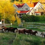 Day is done for the herd at Historic Reesor Ranch