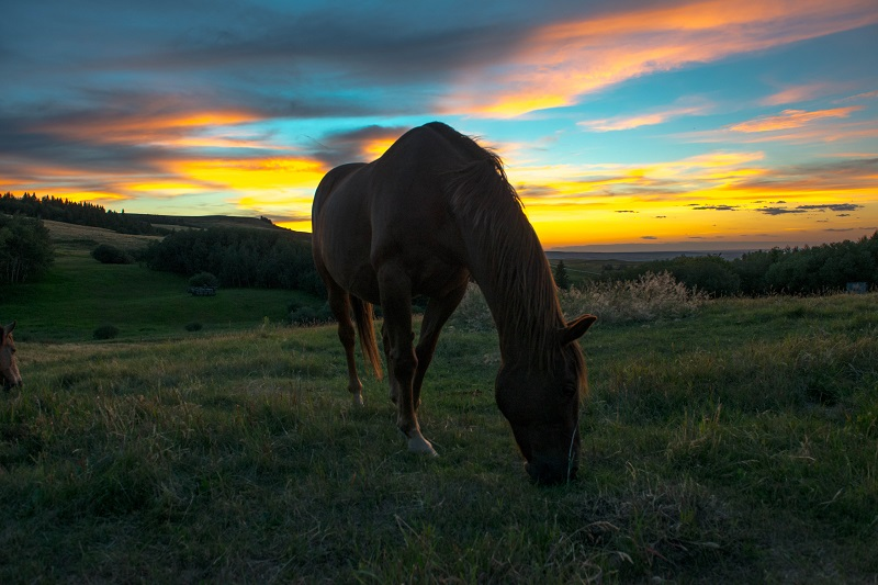 Peaceful horses and peaceful sunsets at Historic Reesor Ranch