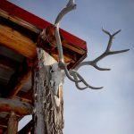 Elk antlers found in the Cypress Hills
