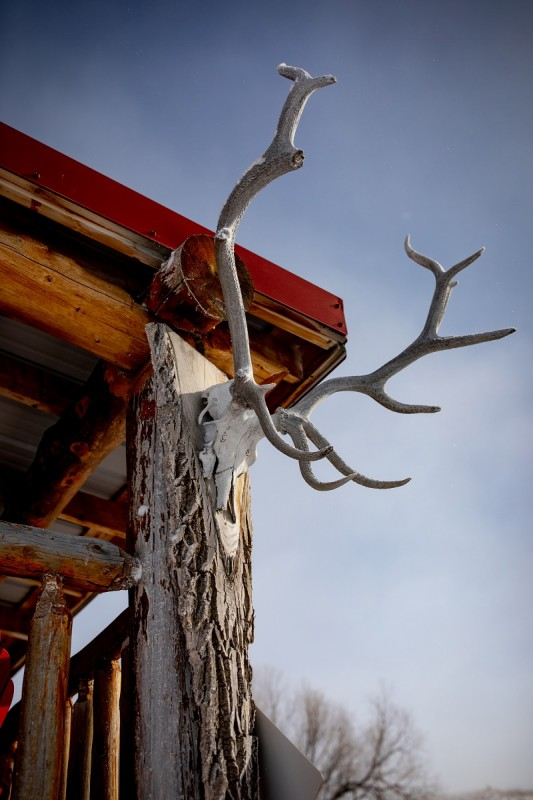 Elk antlers found in the Cypress Hills